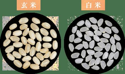 炊飯米の味のバランス