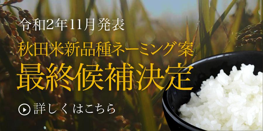 秋田米新品種ネーミング