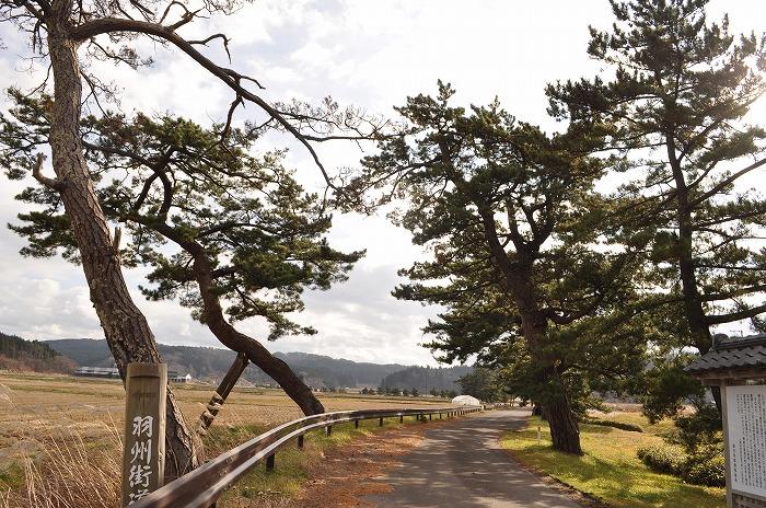 檜山追分旧羽州街道松並木 | あ...