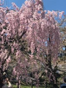 桜と笑顔が満開!!~北海道・東北ブロック交流推進員日記~