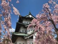 笑顔と桜が満開!!